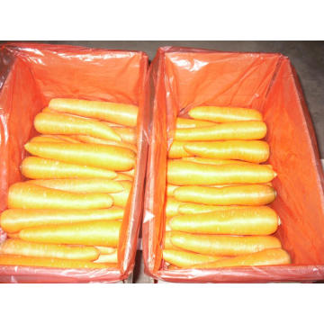 New Crop Carrot 80-150g